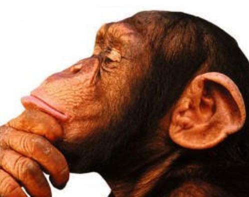 Macaco?